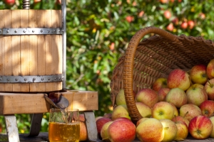 Local Artisan Cider Producers